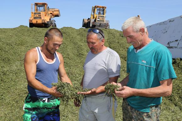 Специалисты Копыльской районной ветстанции ежедневно выезжают на МТФ сельхозпредприятий района для проверки соблюдения технологий при закладке сенажных траншей