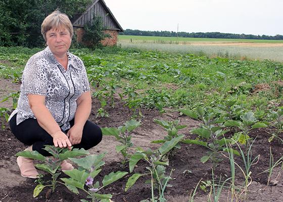Нина Васильевна Жук из деревни Домантовичи Копыльского района выращивает на своем участке даже баклажаны