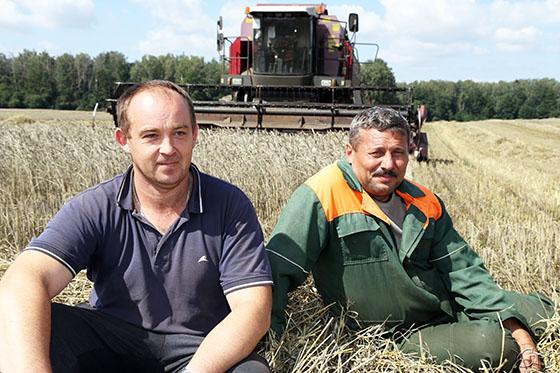 Одни из первых к уборке урожая приступили аграрии ОАО «Скабин»