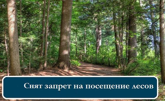 Запрет на посещение лесов в Копыльском районе снят