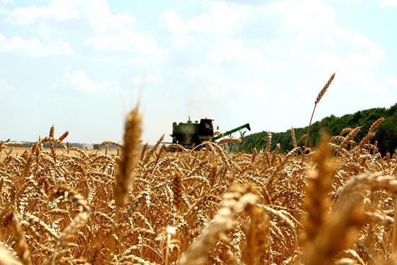 Минская область первой в стране намолотила 1 миллион тонн зерна урожая 2018 года