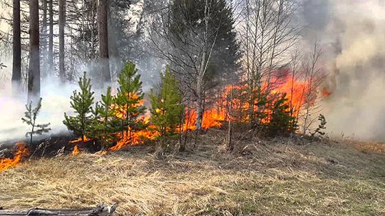 Опасность лесных пожаров