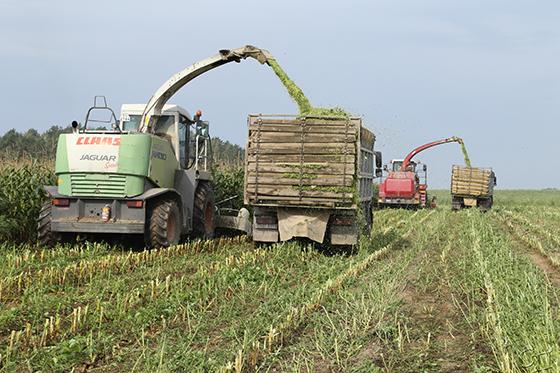 Кормовые запасы в сельскохозяйственном филиале «Рудное» ОАО «Копыльский райагросервис» пополнит кукуруза