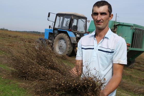 ОАО «Скабин» — единственное на Копыльщине сельхозпредприятие, где занимаются выращиванием льна