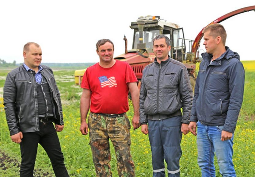 Одними из первых к уборке сурепицы на силос в Копыльском районе приступили ОАО «Душево» и КСУП «Докторовичи»