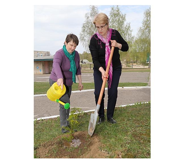 На площадке Центра коррекционно-развивающего обучения и реабилитации Копыльского района недавно обосновались декоративные кустарники и деревья